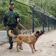 Interessante Polizeitaktik: Schlaue Schäferhunde, können sie das Bildungsniveau im Osten heben?