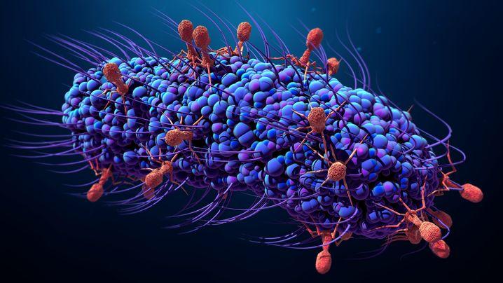 Illustration: Phagen (rot) befallen ein Bakterium