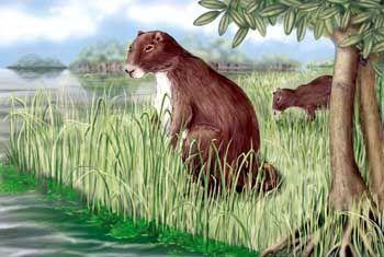 Nagendes Ungetüm: Forscher fanden die fossilen Überreste eines 700 Kilogramm schweren Meerschweinchens