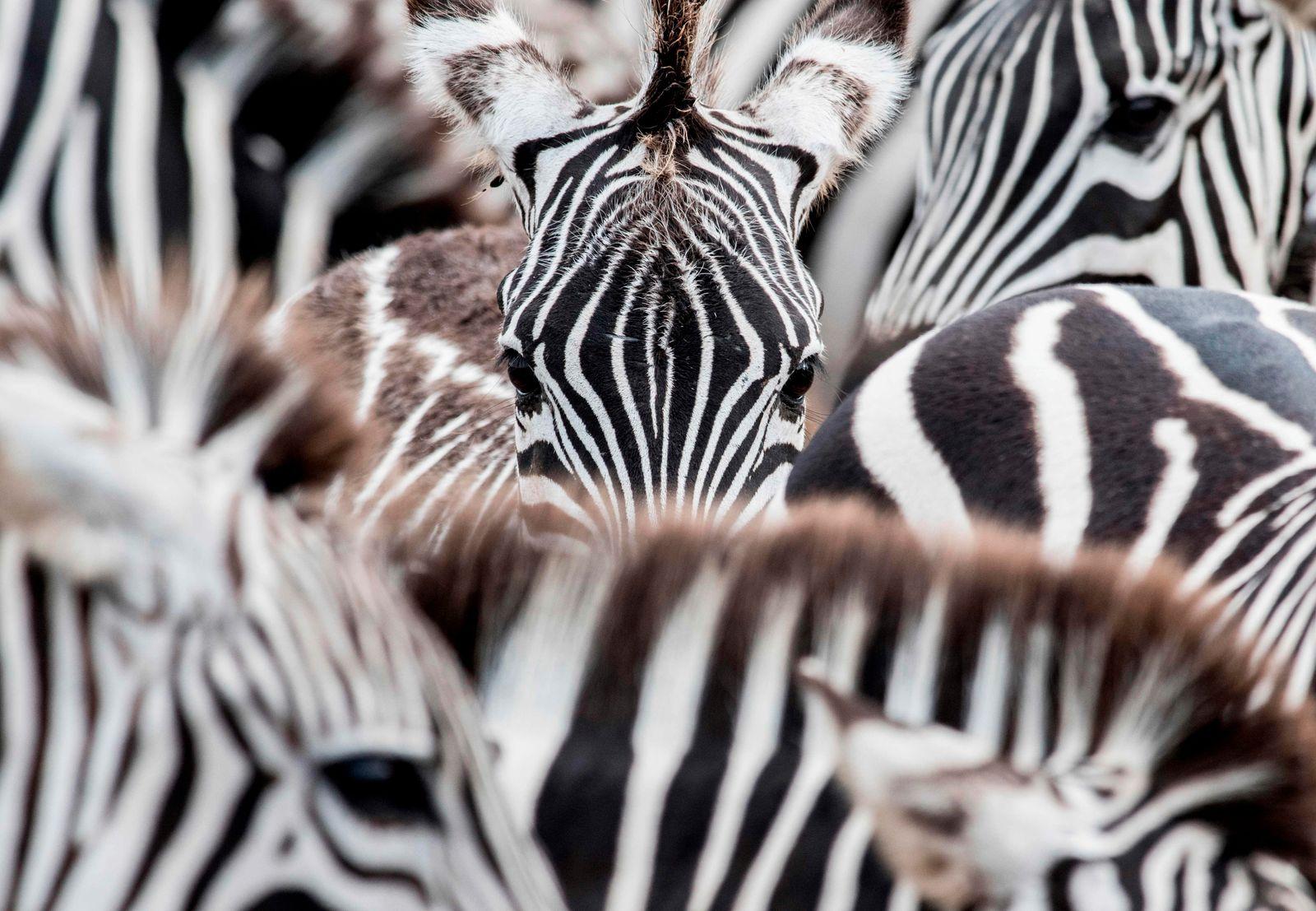 TOPSHOT-COSTA RICA-HEALTH-VIRUS-TOURISM-ANIMAL PARK