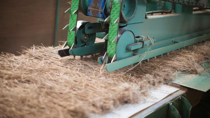 Nachhaltige Kleidung: Baum ja, Wolle nein
