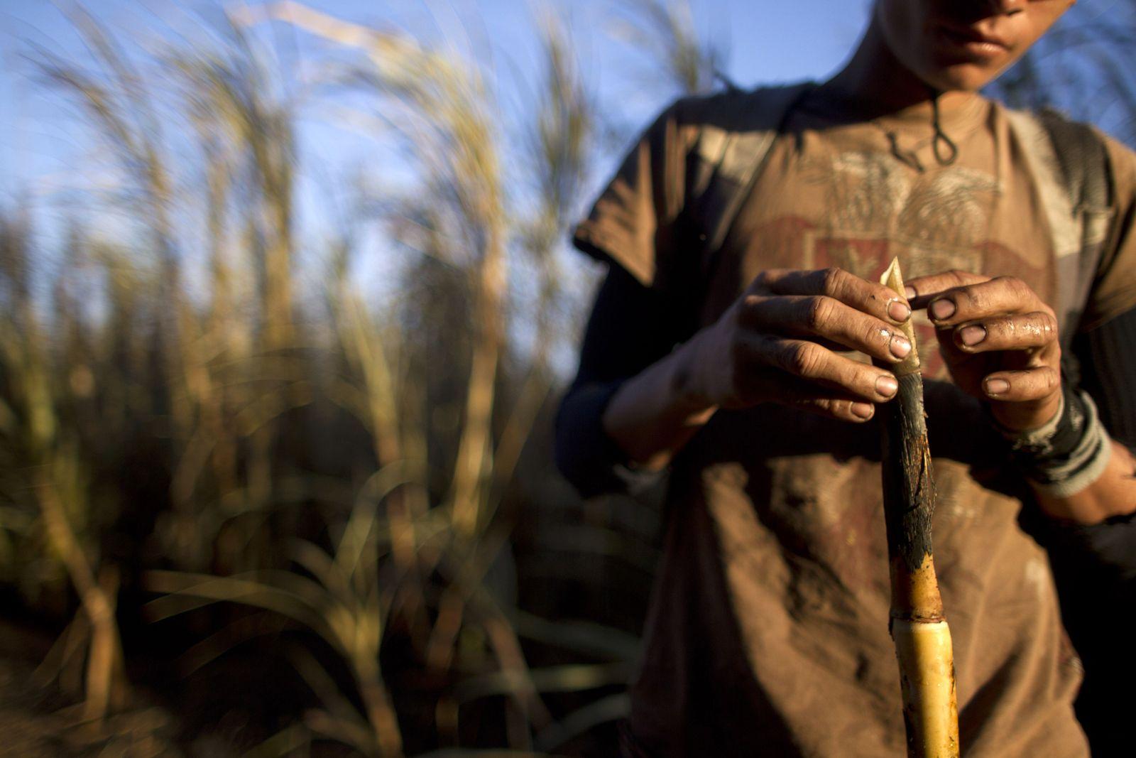 Nicaragua Zuckerrohr