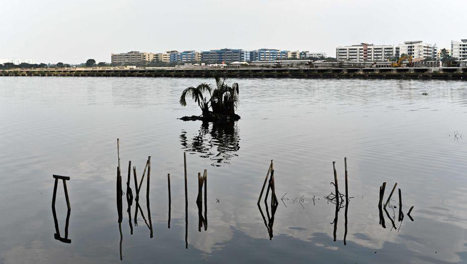 In Jakarta stehen Palmen und Bambusstangen unter Wasser (Archivbild)