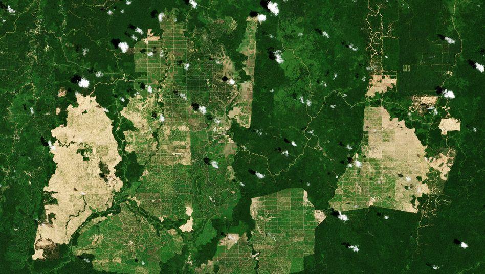 Plantagen auf Borneo: Indonesien produziert etwa 30 Millionen Tonnen Palmöl im Jahr