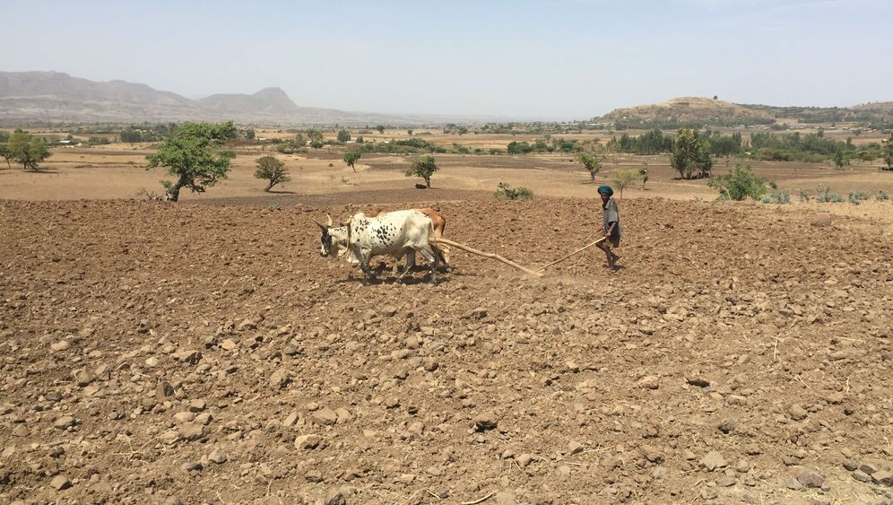 Photo Gallery: Drought in Ethiopia
