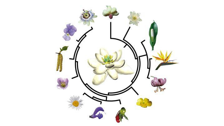 Vorgänger vieler, vieler Pflanze