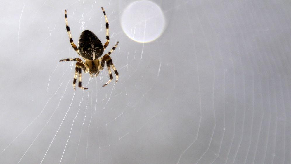 Arachnophobe Entomologen: Libelle lieb, Spinne böse