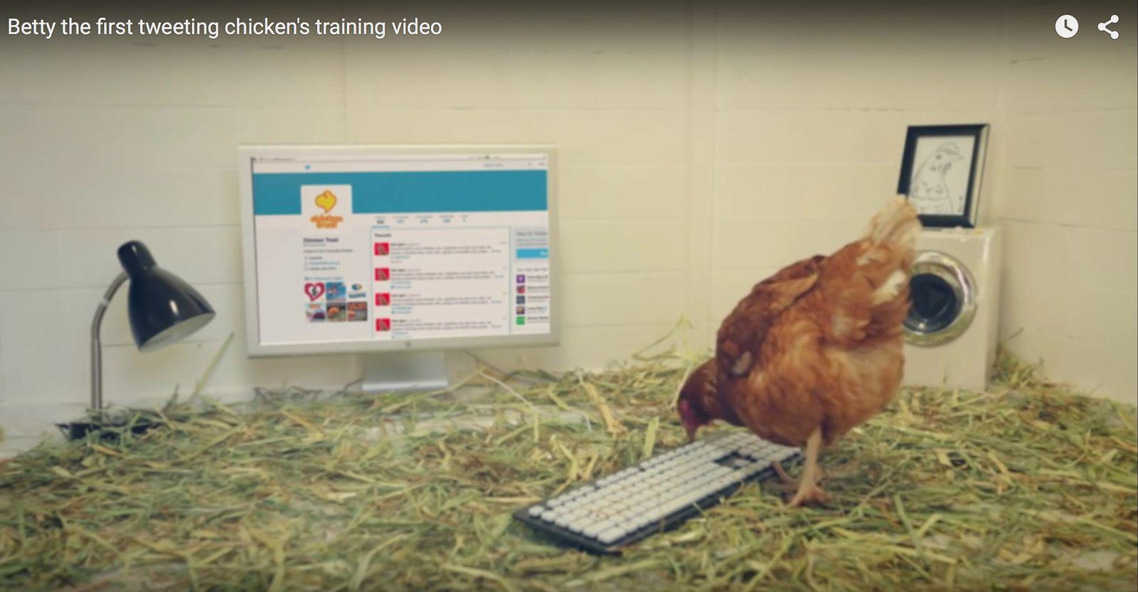 NUR ALS ZITAT Screenshot Twitter Huhn/ Chicken