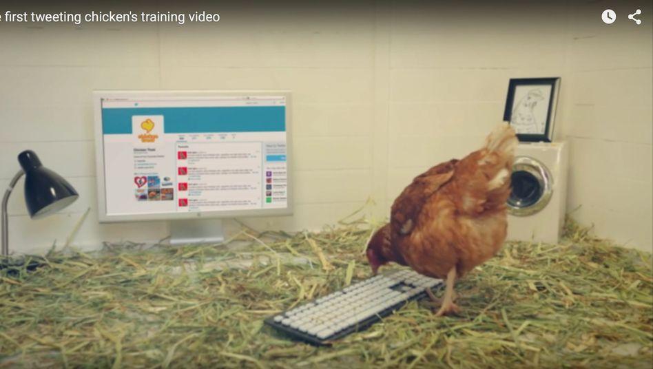 Huhn Betty beim Twittern: Sind die Nachrichten vielleicht Hilferufe? Denn normalerweise landen Hühner bei der Fast-Food-Kette tot auf einem Tablett