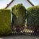 Naturschützer wollen Thuja, Rhododendron und Kirschlorbeer aus Gärten verbannen