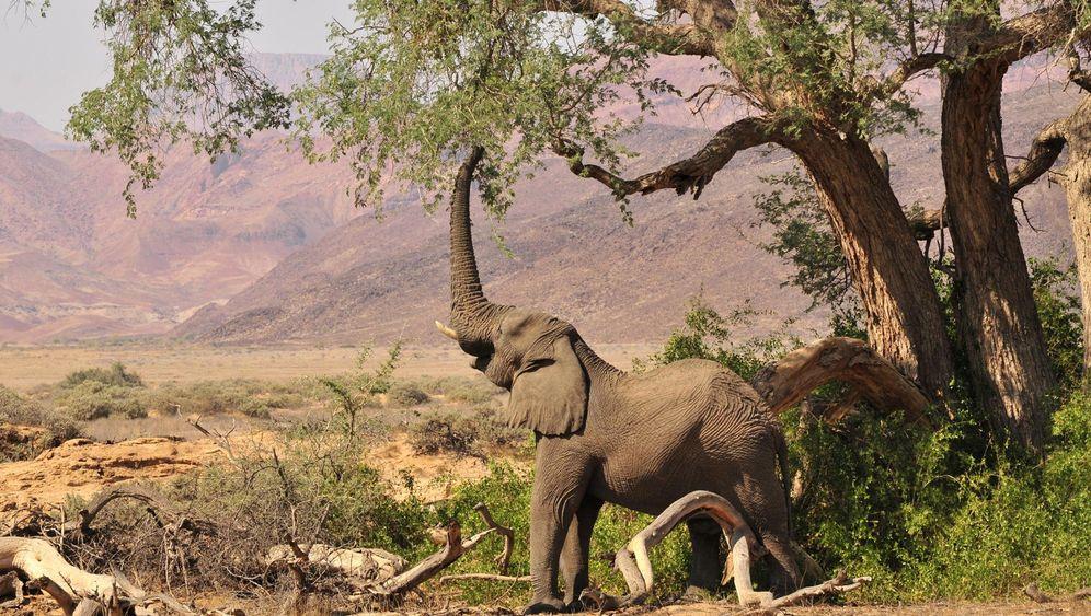 Safari in Namibia: Auf den Spuren der Wüstenelefanten