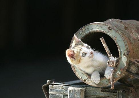 Cat. Curiosity. Bad combination.