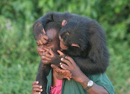 Mensch und Schimpanse: Evolutionäre Trennung vor fünf bis sieben Millionen Jahren