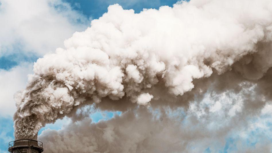 Als das letzte Mal so viel CO2 in der Luft war, wuchsen Pflanzen in der Antarktis