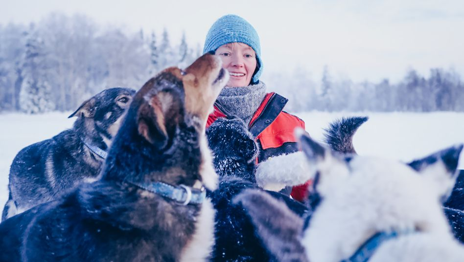 Katharina Koch-Hartke lebt in Lappland und trainiert dort Schlittenhunde