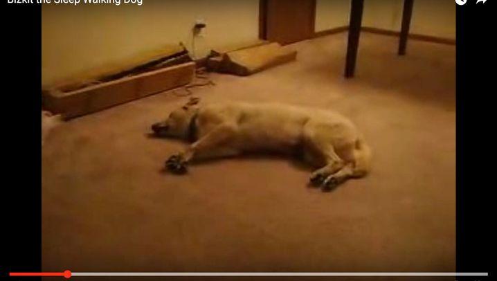 Tiervideos auf YouTube: Wie süüüß...! Oder doch nicht?