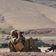 Australien will 13 Soldaten wegen Kriegsverbrechen aus Armee entlassen