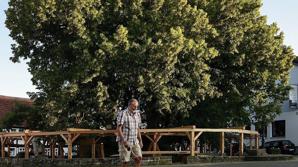 """Stützkonstruktion um eine Linde in Schenklengsfeld:""""Da muss Luft ran"""""""