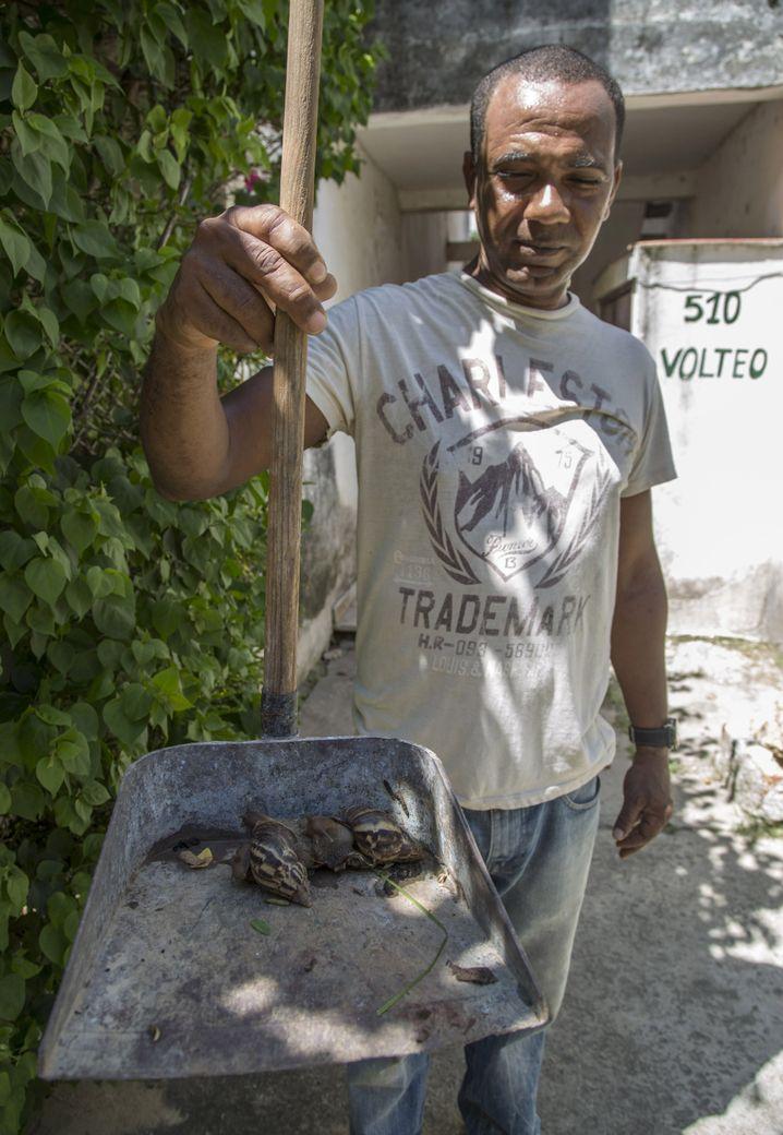 Diese Riesenschnecken hat ein Mann aus Havanna in seinem Garten gefangen