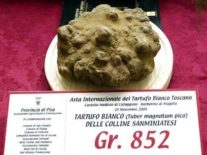 Rekord-Trüffel: Die 852 Gramm wechselten für rund 40.000 Euro den Besitzer