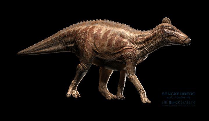 Eine Rekonstruktion des Edmontosaurus - so oder ähnlich könnte der riesige Pflanzenfresser ausgesehen haben