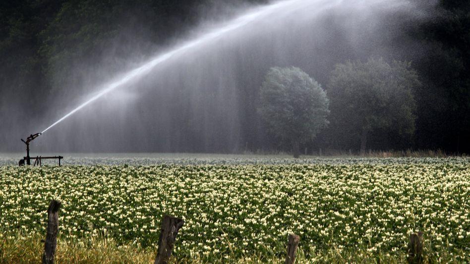 """Feldbewässerung: """"Hohe bakterielle Belastungen"""""""