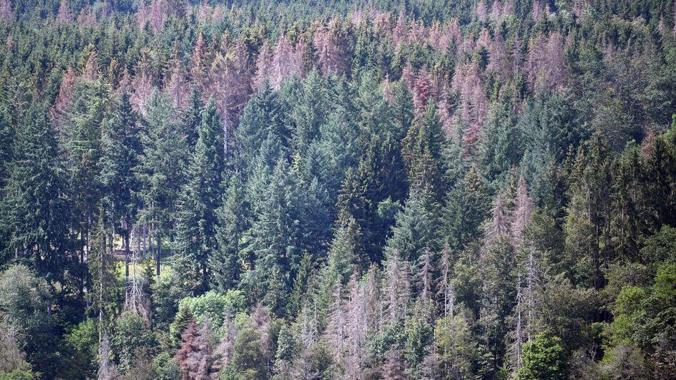 Vielerorts ist der Wald stark geschädigt - wie hier im baden-württembergischen Waldshut-Tiengen