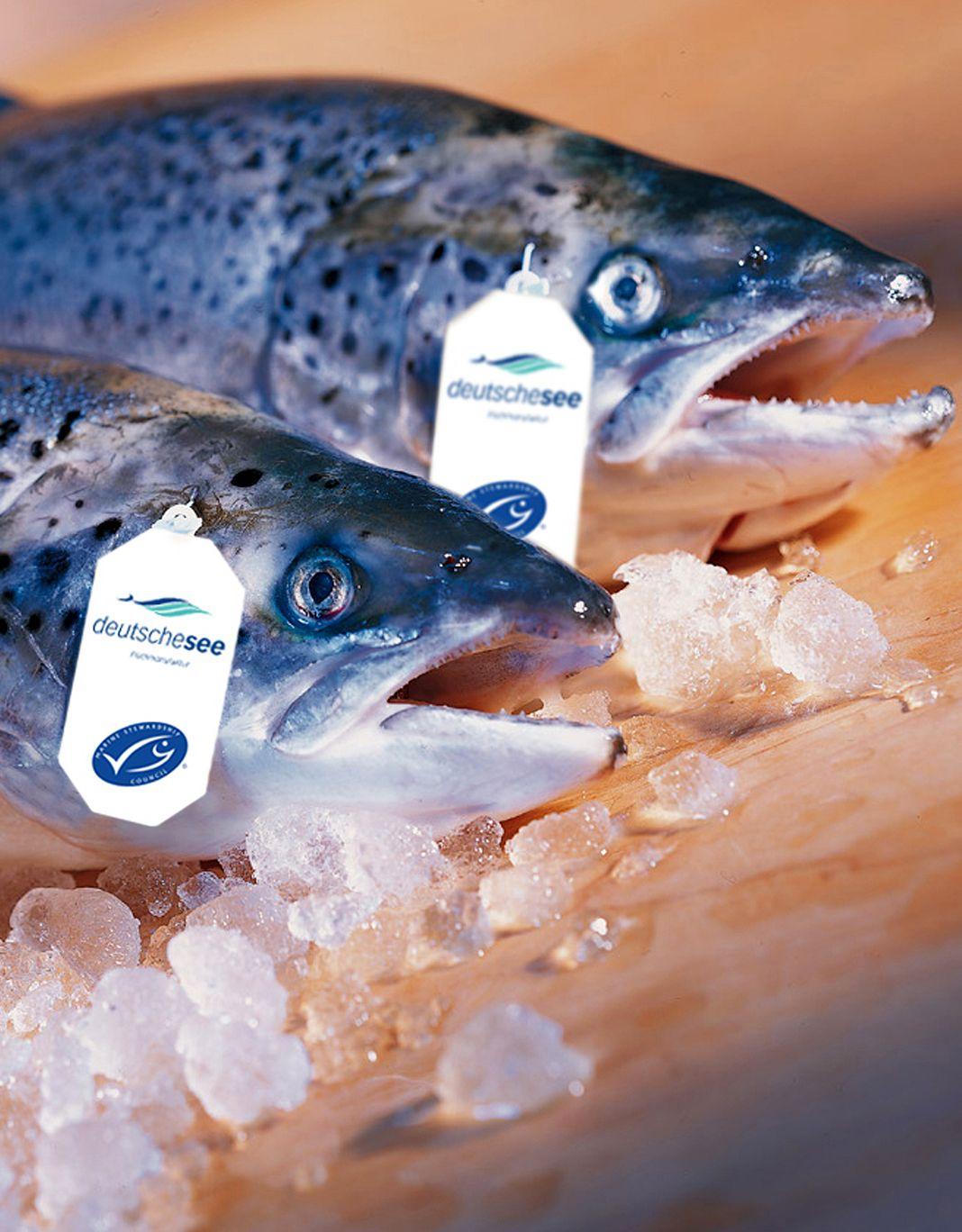 MSC-Siegel / Frischfisch mit Siegel