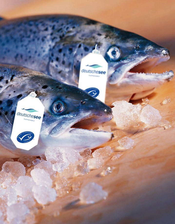 Frischfisch mit MSC-Siegel
