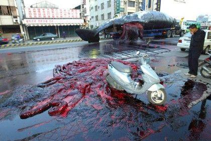 Explodierter Wal: Überraschung in Taipeh