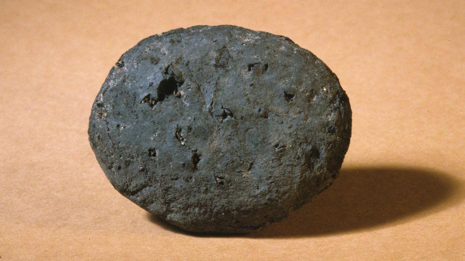 Stein, Brot? Nein, Kot! Die runde Versteinerung aus Zug wurde zur Attraktion