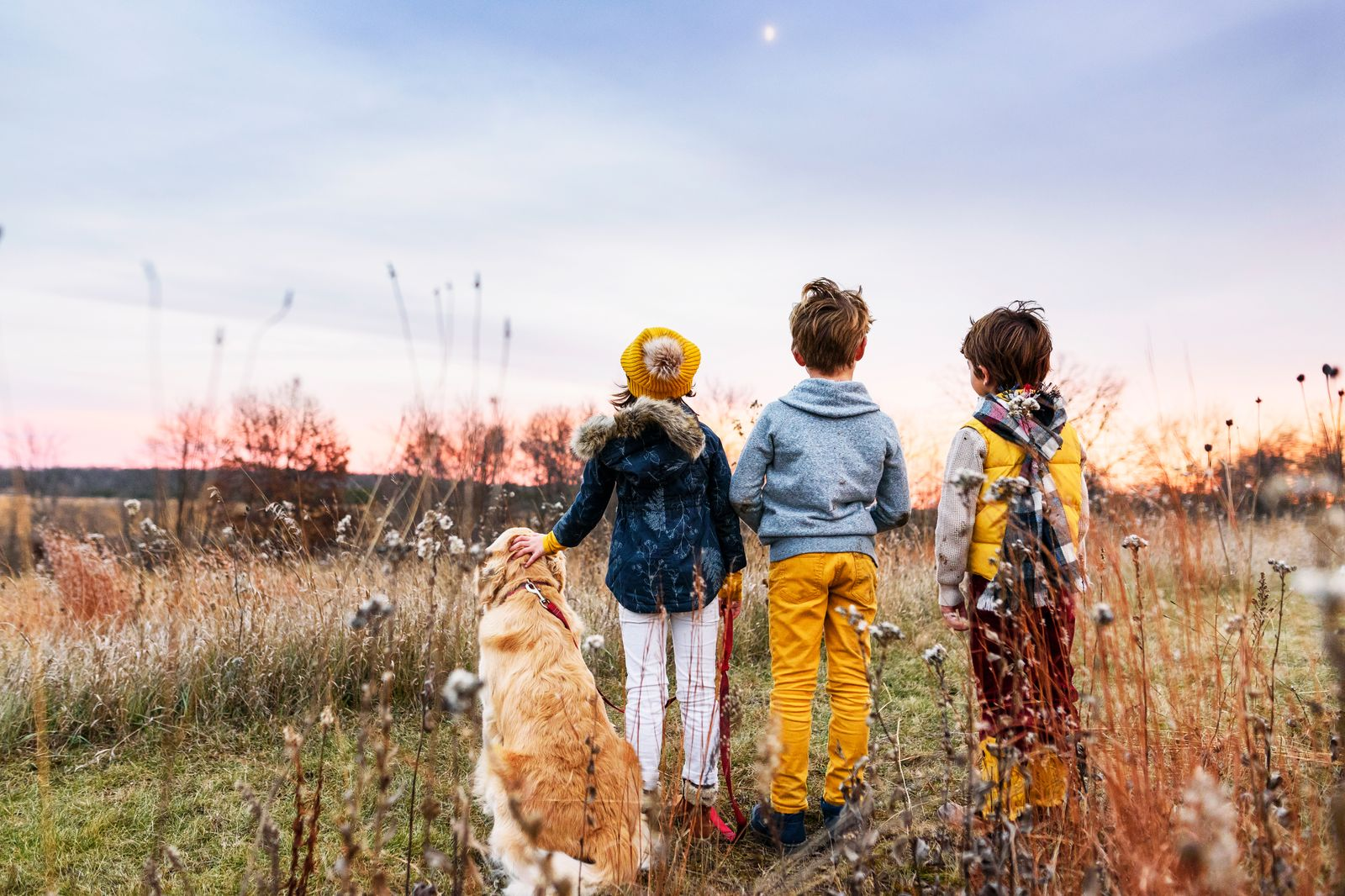 Three children in a field at sunset with their golden retriever dog, United States