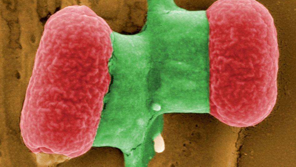 Ehec-Bakterium: Zwei weitere Todesfälle bestätigt