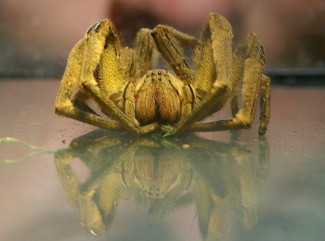 Suche nach exotischer Spinne in Einkaufsmarkt