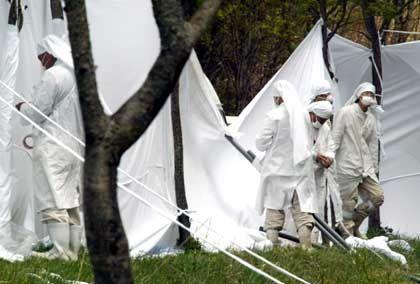 """Japan: Sektenmitglieder von """"Pana Wave"""" behängen Bäume mit weißen Tüchern, um Elektrosmog zu unterbinden. Die Farbe Weiß helfe gegen Strahlung, glauben sie"""