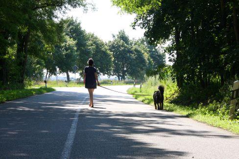 Allein mit Hund in der Provinz: Eine Städterin bei der Konfrontation mit sich selbst