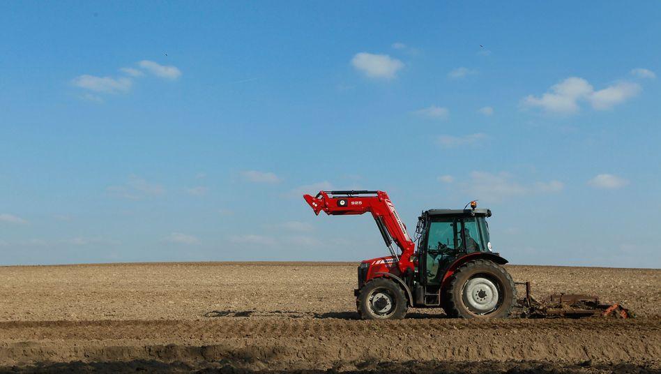 Landwirtschaft in Schleswig-Holstein: Großkonzerne profitieren