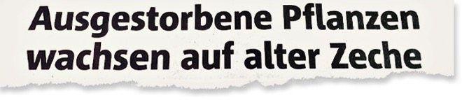 Aus den »Ruhrnachrichten«