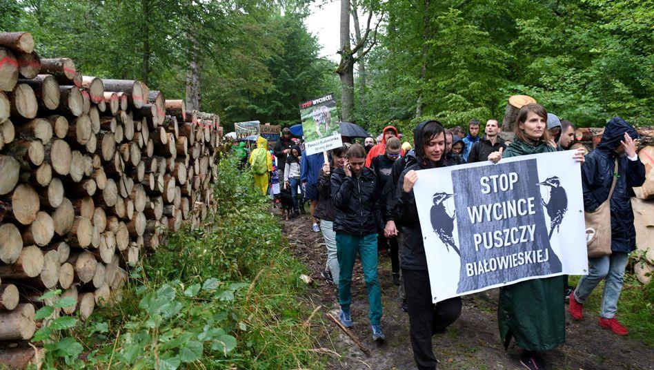 """""""Stoppt die Waldfällungen"""" steht auf dem Schild der Demonstranten, die im Sommer 2017 im Wald protestierten"""