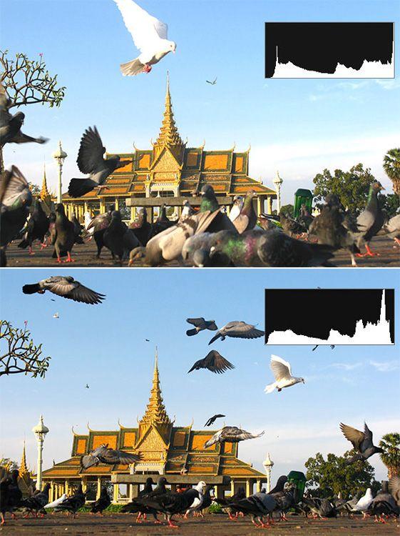 Histogramm-Check: Das obere Bild ist überbelichtet, es zeigt zuviel reines Weiß, die Taube erscheint ohne Detailzeichnung.