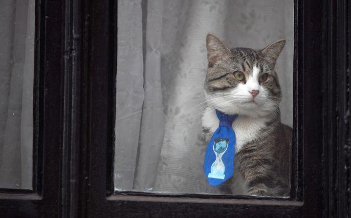 Katze in der equadorianischen Botschaft