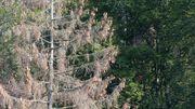 Deutschlands Wäldern geht es so schlecht wie nie zuvor