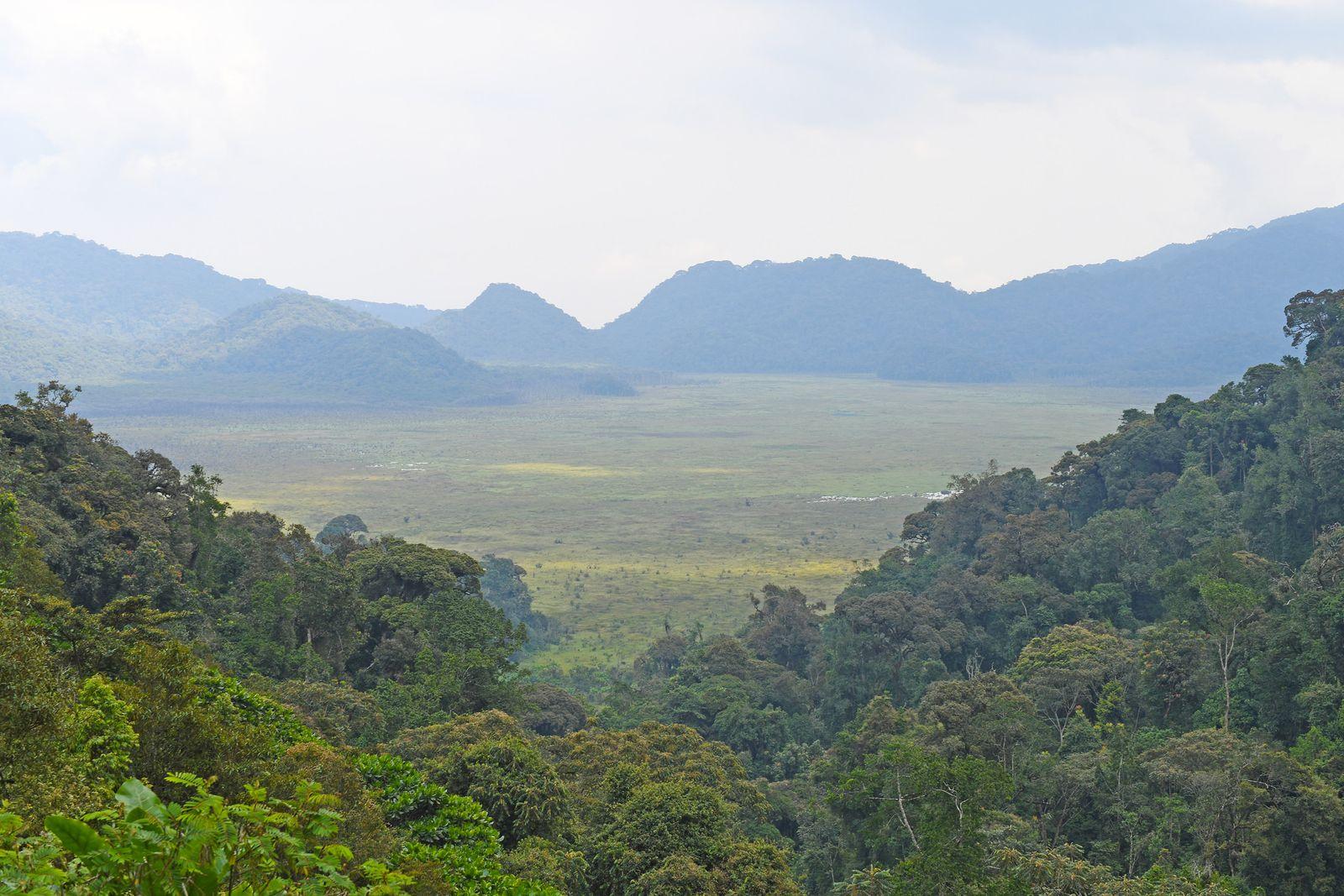 Bergregenwald in Ruanda