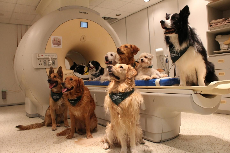 Trainingshunde/ fMRI Scanner