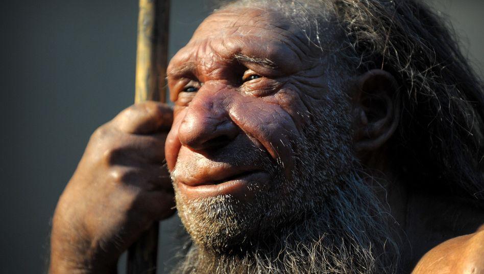 Nachbildung eines älteren Neandertalers