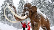 Mutation machte Mammuts winterhart