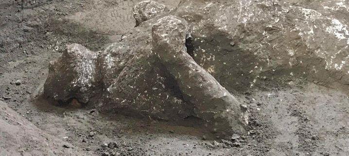 Die Fachleute zeigten sich begeistert, wie viele Details sie über die entdeckten Leichen ermitteln konnten