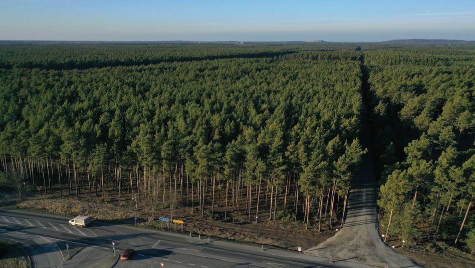 Wald in Grünheide: Tesla will das Abholzen von Bäumen dreifach ausgleichen