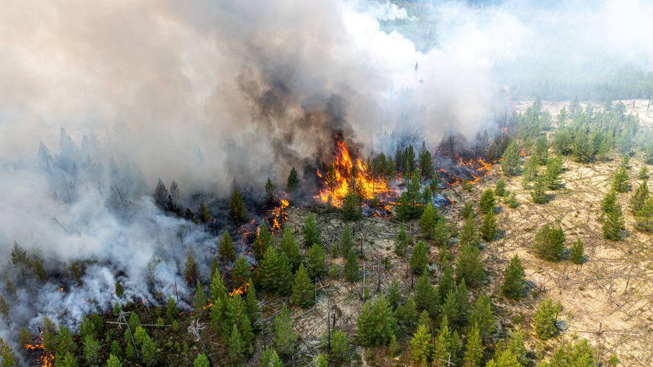 Waldbrand in Sibirien: In abgelegenen Regionen wird nicht gelöscht