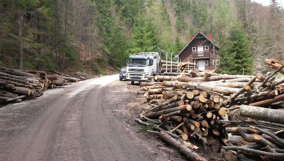 Holzschlag im rumänischen Naturpark Apuseni (Archivbild)